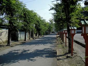 本坊への並木道