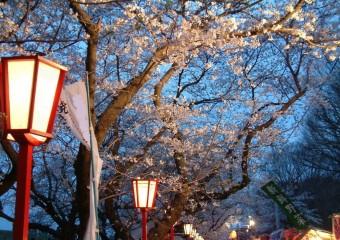 夜桜ボンボリ